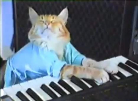 Un festival pour les vidéos de chats ! | Les chats c'est pas que des connards | Scoop.it