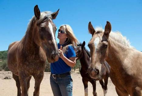 El Dorado County seeks homes for 48 horses in protective custody | Pet Sitter Picks | Scoop.it