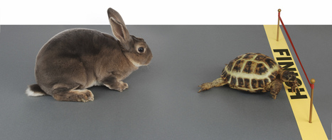 The turtle becomes the hare: Nextdoor kicks up the pace with John Doerr as a new advisor | Hyperlocal and Local Media | Scoop.it