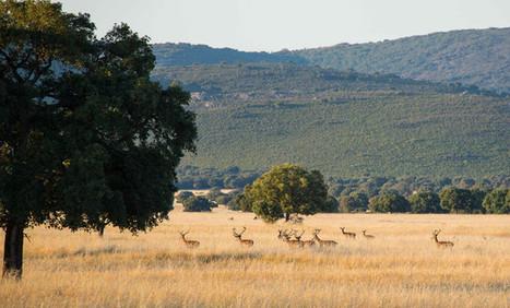Cien años de Parques Nacionales en España | Actualidad forestal cerca de ti | Scoop.it