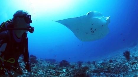 Vidéo plongée Full HD | Croisière Grand Sud aux Maldives ! | Plongeurs.TV | Scoop.it