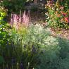 Gardening & Garden Decor