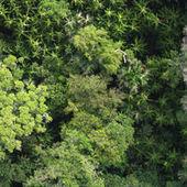 La forêt amazonienne inventoriée pour la première fois | The Blog's Revue by OlivierSC | Scoop.it
