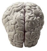 Strategic or random? In the face of uncertainty, the brain chooses randomness as the best strategy | Neuroscience - Memory - Learning - Mindfulness - Motivation | Scoop.it