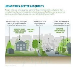 Urban Trees Can Save Lives By Reducing Air Pollution and Temperature | Suburban Land Trusts | Scoop.it