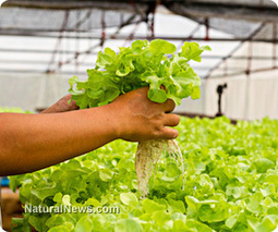 Aquaponics: Is this promising, sustainable farming method the ... | Growing Food | Scoop.it