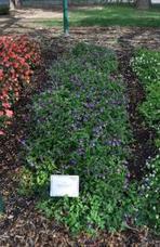 "Annual Flower Trial Garden at Colorado State University | 2012 ""Best of"" Annuals | Annie Haven | Haven Brand | Scoop.it"