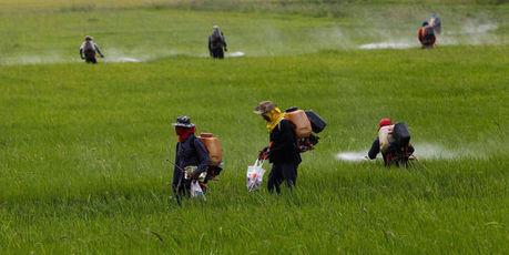Pesticides : les preuves du danger s'accumulent | Le Monolecte | Scoop.it