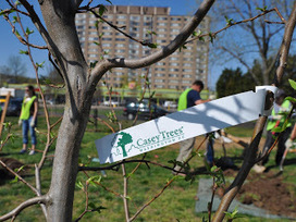Rebuilding Place in the Urban Space: Got Tree-Plantable Space? | Sustainable Futures | Scoop.it