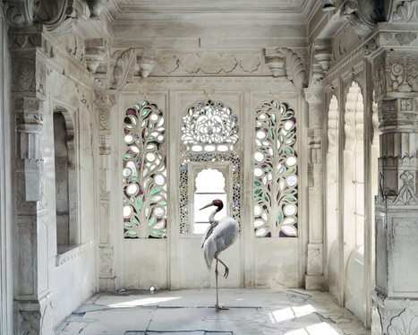 International: PhotographerKaren Knorr | Beyond London Life | Scoop.it