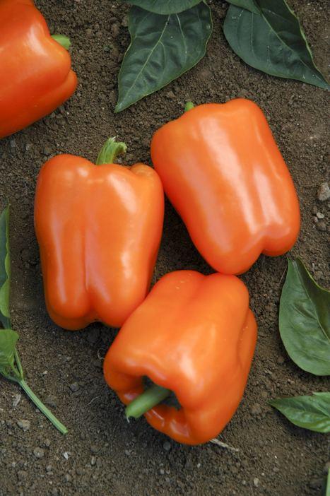 Watch Your Garden Grow | Vegetable Gardening Resources | Scoop.it