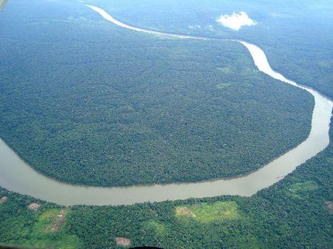 Asia Pulp & Paper commits to end rainforest destruction | Conservation & Environment | Scoop.it
