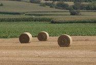 Stop aux chèques en blanc pour l'agriculture | Des nouvelles de la 3ème révolution industrielle | Scoop.it
