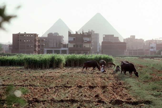 Egypt Agricultural Exports Surge after Currency Float
