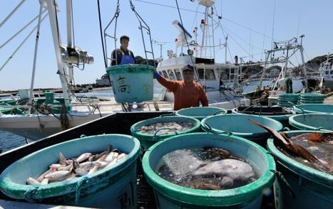 El 40% de los peces de la costa de Fukushima no son comestibles | BROTES DE NATURALEZA | Scoop.it