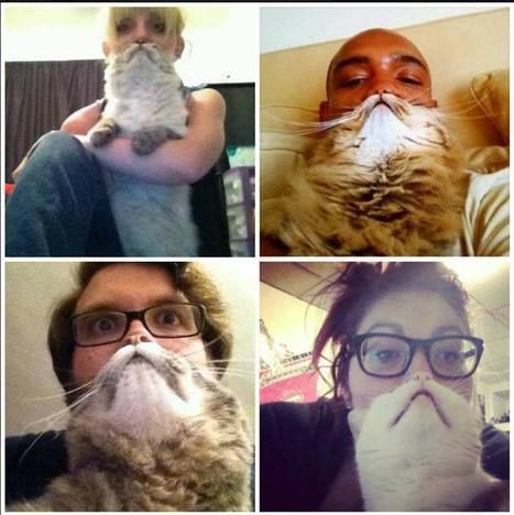Touch of Catnip: Cat Beards   catnipoflife   Scoop.it
