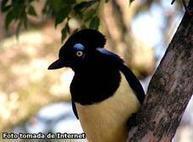 Científicos aseguran que los animales también tienen conciencia | BROTES DE NATURALEZA | Scoop.it