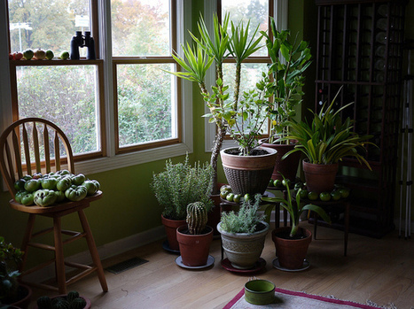 9 Houseplants That Clean The Air And Are Basically Impossible To Kill | Consciousness & Creativity | Scoop.it