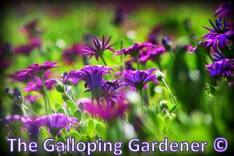 The Galloping Gardener | Cool Sites I love | Scoop.it