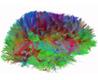 The Brain Unmasked | MIT Technology Review | Neuroscienze | Scoop.it