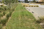 How to Reduce Water Management Expenses with Green Infrastructure · Environmental Leader | Water Stewardship | Scoop.it