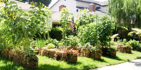 Hereu0027s Why You Should Be Adding Straw Bales To Your Garden | Straw Bale  Gardening |