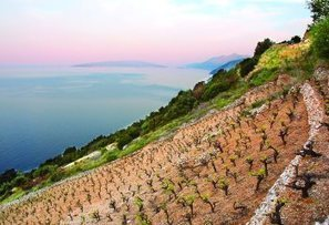 A report on the wines and tourism opportuinites in Croatia | Route des vins | Scoop.it