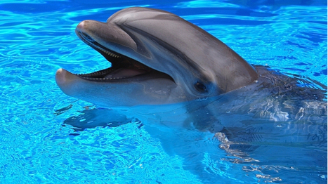 Humane Society welcomes Navy's decision to replace dolphins with drones | The Raw Story | Bots and Drones | Scoop.it