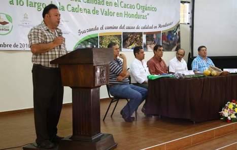 Prevén que en 2017 el 50% del cacao hondureño será de calidad | cacao | Scoop.it