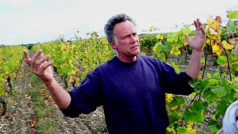 Vision du Bio par Philippe Gourdon | Vins natur... | vin naturel | Scoop.it