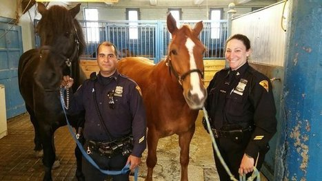 Dog Bites Police Horse in Brooklyn   The Jurga Report: Horse Health, Welfare, and Care   Scoop.it