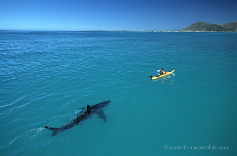 The White Shark Kayak Story | Geography Education | Scoop.it