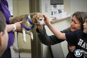 Un chien perdu retrouve sa famille 5 ans après   CaniCatNews-actualité   Scoop.it