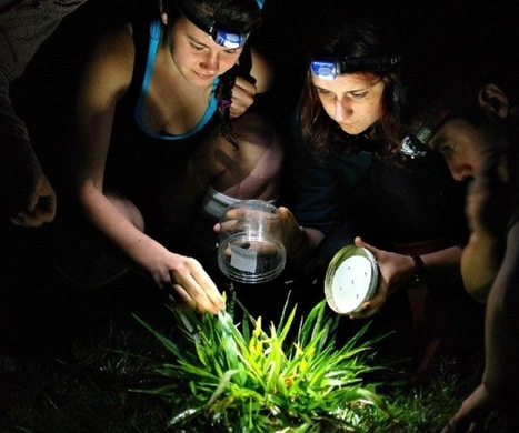 Science Teaching Dyslexic Students in the Rainforest - Wendy Welshans   Learning Disabilities Digest   Scoop.it