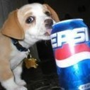 A funny dog eat a pepsi. | 2 dogs are very happy | Scoop.it
