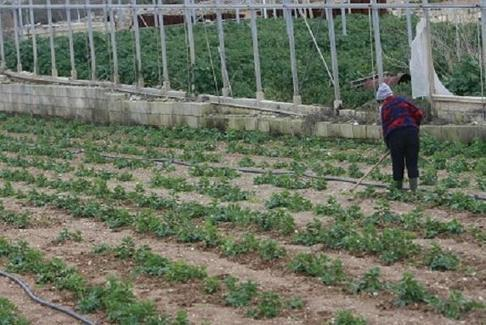 Farmers call for local laboratory to test for pesticides in produce  - The Malta Independent