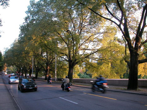 A quoi servent les parcs et les arbres en ville? L'arbre en ville n'est pas décoratif ! Partie 1 - Laboratoire de la ville du futur | l'écologie en milieu urbain | Scoop.it