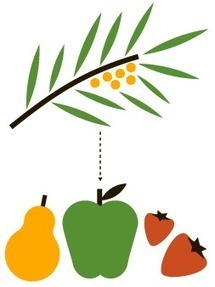 Infographic Break: Big Facts on Climate Change and Agriculture   The Agrobiodiversity Grapevine   Scoop.it