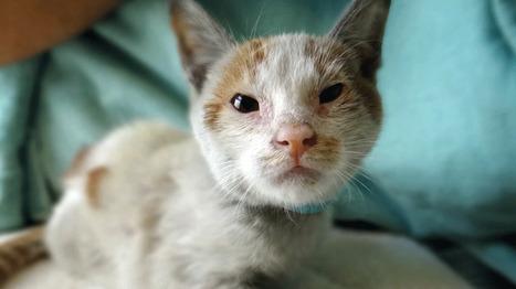 Un chat arrêté pour contrebande de portables en Russie | Mais n'importe quoi ! | Scoop.it