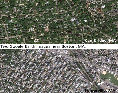 Urban Trees Reveal Income Inequality | Geography Education | Scoop.it