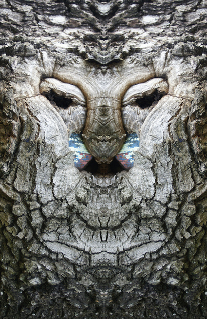 Dream Creatures: Reflected Images of Tree Bark Reveal the Faces Hiding in the Forest | Random Ephemera | Scoop.it