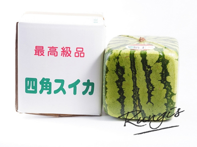 Square melon premiers in Europe - FreshPlaza - FreshPlaza | Agricultural & Horticultural Industry News | Scoop.it