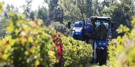 Vins de Bordeaux : «Une année 2014 difficile»   Le vin et ses innovations   Scoop.it
