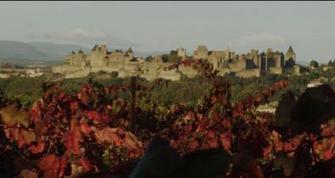 Castigno | LIVE grape harvest in HHHHHHHHHHHHHD resolution | Charliban Worldwide | Scoop.it