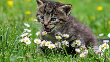 local adolescent chatte chatte rasée trentenaire pics