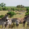 East African Safaris