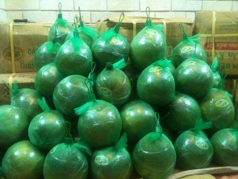Kỹ thuật trồng bưởi da xanh cho nhiều trái-Vườn cây bốn mùa | tamdeptrai | Scoop.it