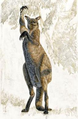 Extinct giant kangaroos didn't hop, they walked - 15 October 2014 - New Scientist   Teaching history and archaeology to kids   Scoop.it