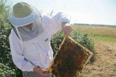 Les reines de la biosurveillance | EntomoNews | Scoop.it