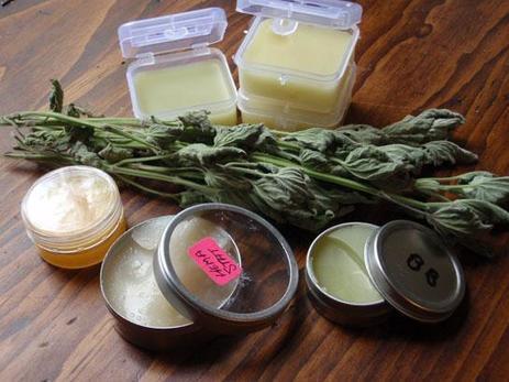 Survival Skills: 14 Wild Medicinal Plants | BOB to BOL by BOV | Scoop.it